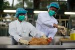 Tyson Foods Shares Dive Because 73,500 Birds Got the Dreaded Bird Flu