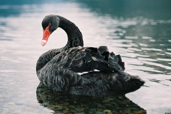 Market Ignores 'Black Swan' Shadow Overhead