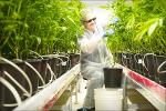 Tilray Is Popping Following Wednesday's Volatile Session