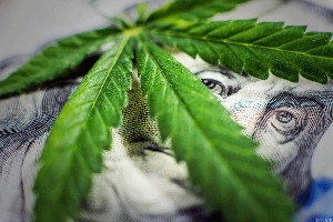 How to Invest in Cannabis - In Its Many Forms