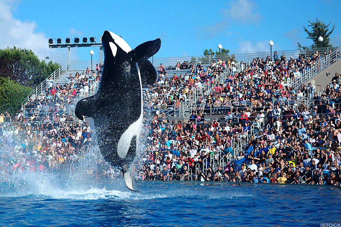SeaWorld CEO Exits Stage After Just Seven Months in Top Role