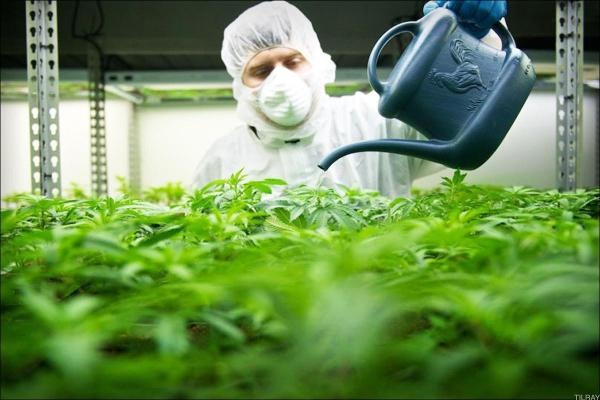 Tilray Upsizes and Prices $450 Million Debt Offering: LIVE MARKETS BLOG