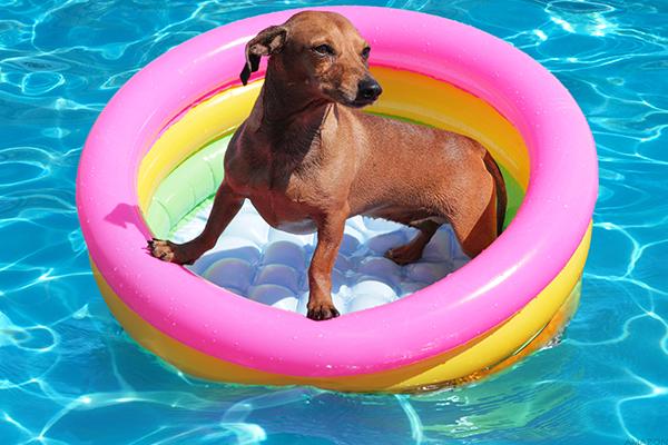 Dog Friendly Pool Float