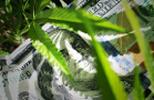GW Pharmaceuticals Is Ready to Rally More: How to Trade This Cannabis Stock