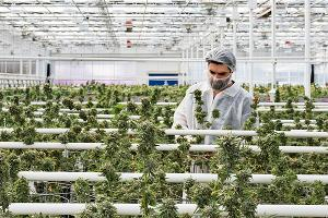 Pot Stocks Reverse Course Amid Market Selloff