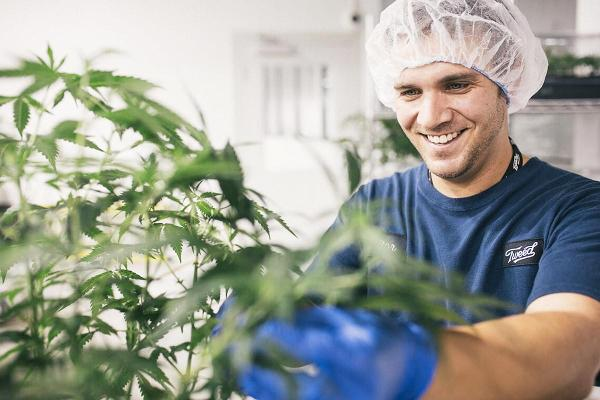 Canopy Growth Sells 13.2% Stake in Australian Cannabis Firm AusCann