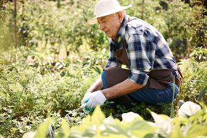 Growing Your Retirement Income Literally -- by Farming