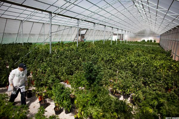 Canopy growth likely merger partner for alcaliber thestreet for Serre pour cannabis interieur