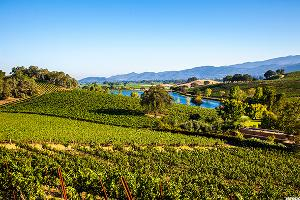 Californian Winery, Vineyards Up for Grabs