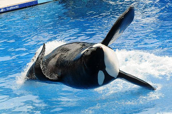 SeaWorld Entertainment (SEAS) Stock Retreating as Loss Widens