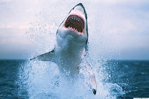 Shark Bites: There Is No Wild Celebration Going On, but These 3 Stocks Look Good