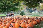 The Pumpkin Retirement Plan: Cultivate the Best Investments and Prune the Worst